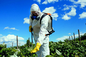 Industrial agriculture theme. Man with protective mask spraying toxic pesticides or insecticides on fruit growing plantation. Natural hard light on sunny day. Blue sky with clouds in background.
